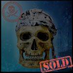 SKULLYS #275 - SOLD